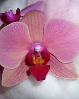 Beraterin: Orchidee* mia